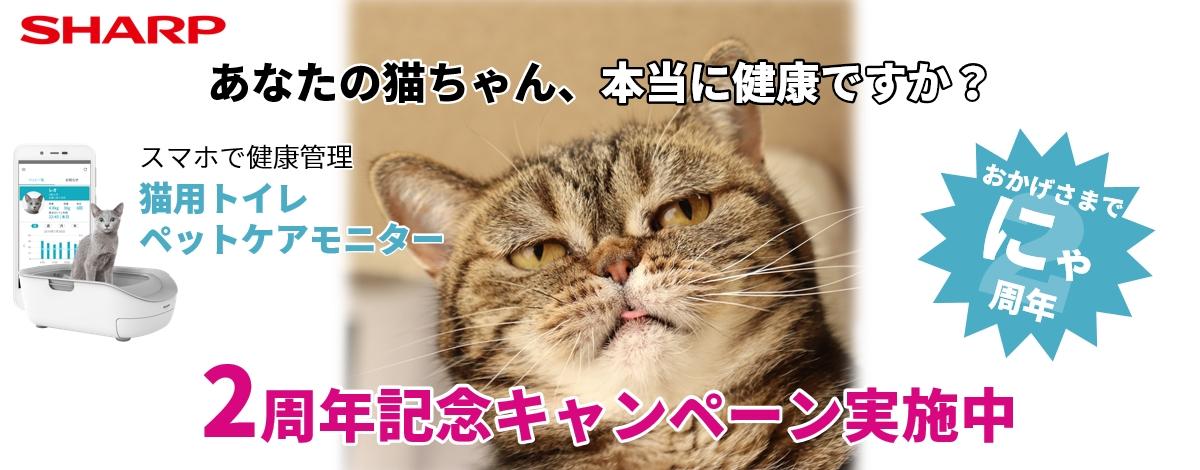 あなたの猫ちゃん、本当に健康ですか?